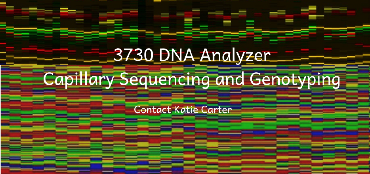 3730 DNA Analyzer: Capillary Sequencing and Genotyping